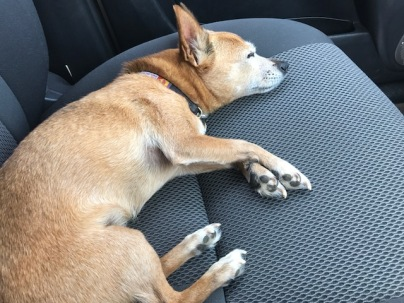 Wolfy car seat